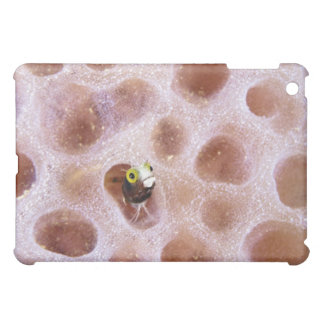 Spinyhead Blenny (acanthemblemaria spinosa) in iPad Mini Cover