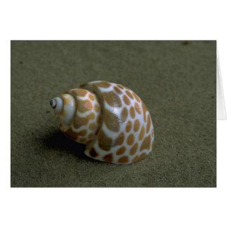 Spiral babylon (Babylonia spirata) Shell Greeting Card