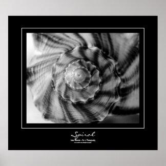 Spiral Shell, Black and White, Black Border Poster