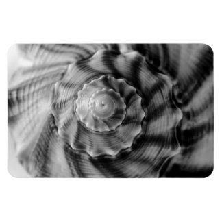Spiral Shell, black & white, Magnet