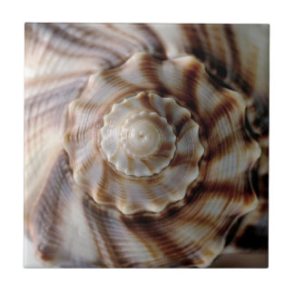 Spiral Shell Ceramic Tile