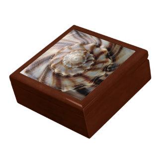 Spiral Shell Gift Box