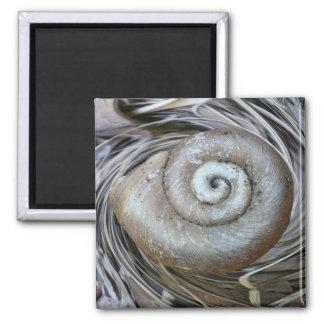 Spiral Shell Magnet