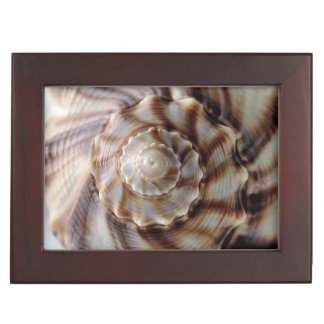 Spiral Shell Memory Boxes