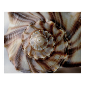 Spiral Shell Poster