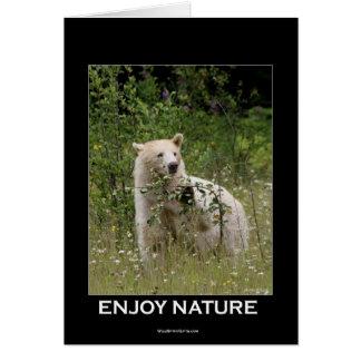 Spirit Bear Gifts Card