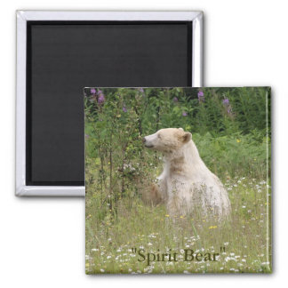 Spirit Bear Gifts Fridge Magnets