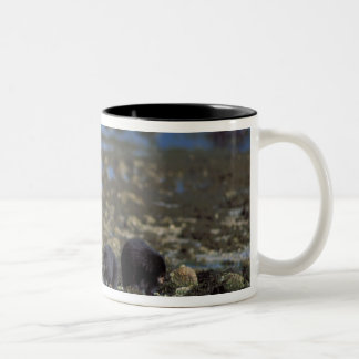 spirit bear, kermode, black bear, Ursus Coffee Mug