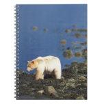 spirit bear, kermode, black bear, Ursus Spiral Note Book
