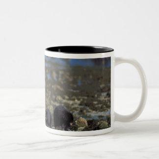 spirit bear, kermode, black bear, Ursus Two-Tone Coffee Mug
