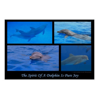 Spirit Of A Dolphin Print