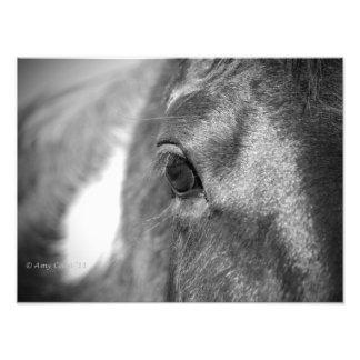 Spirit of the Horse Photographic Print