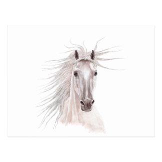 Spirit of the Wind Horse -vintage- Postcard