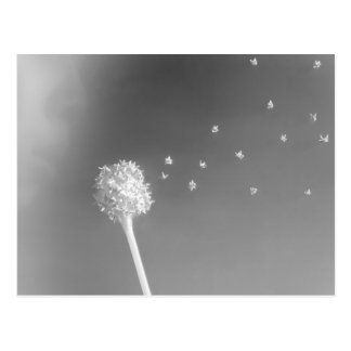 Spirit of the Wind Postcard