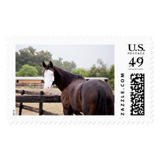 Spirit Stamps