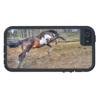Spirited Pinto Stallion Equine Action Photo iPhone SE/5/5s Case