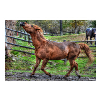 Spirited Playful Chestnut Ranch Horse Equine Photo Poster