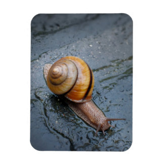 Spirited Snail on a Rainy Day Magnet