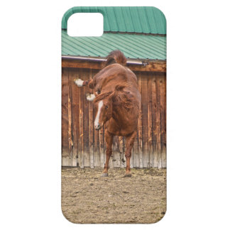 Spirited Sorrel Horse Bucking by a Barn iPhone 5 Cover
