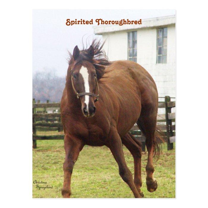Spirited Thoroughbred Postcard