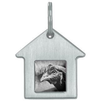spirits and chickens pet tag