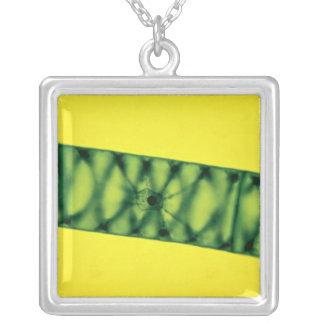 Spirogyra Green Algae Custom Jewelry