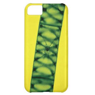 Spirogyra Green Algae iPhone 5C Cover