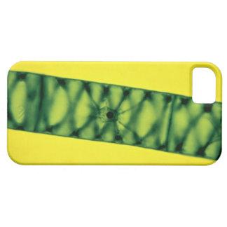 Spirogyra Green Algae iPhone SE/5/5s Case