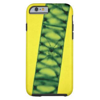 Spirogyra Green Algae Tough iPhone 6 Case