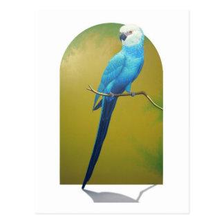Spix's Macaw Postcard