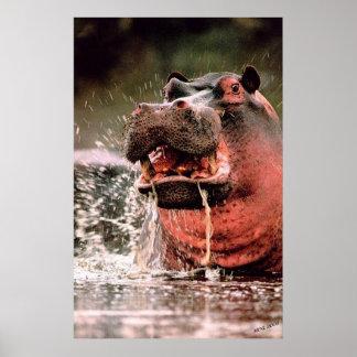Splash Hippopotamus Portrait Poster