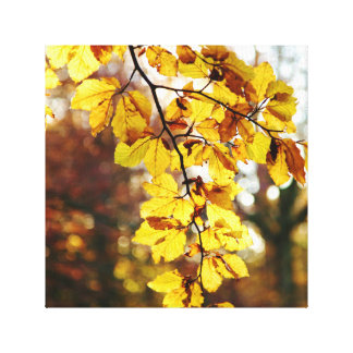 Splash of Autumn Canvas Print