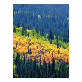 Splash of Fall Color Post Card