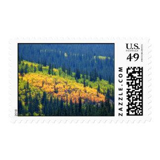 Splash of Fall Color Stamp