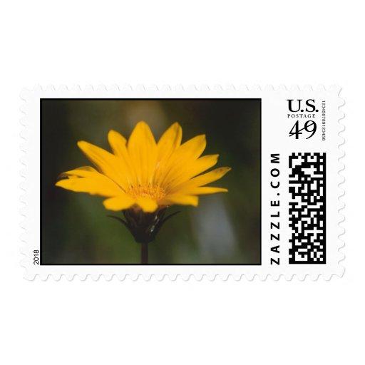 Splash of sunshine postage
