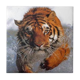 Splashing Majestic Bengal Tiger Swim Toward Prey Tiles