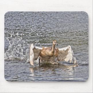 Splashing Mute Swan Wildlife Waterfowl Photo Mouse Pad