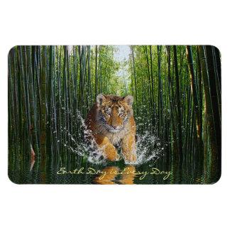 Splashing Tiger Cub & Bamboo Wildlife Art Magnet