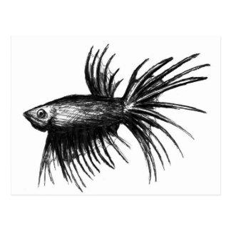 Splendens siameses de Betta de los pescados que Postal