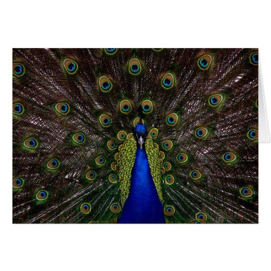 Splendid Peacock Card