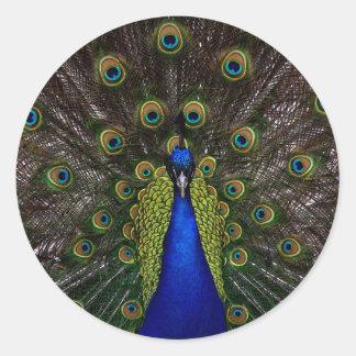Splendid Peacock Classic Round Sticker