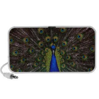 Splendid Peacock iPod Speakers