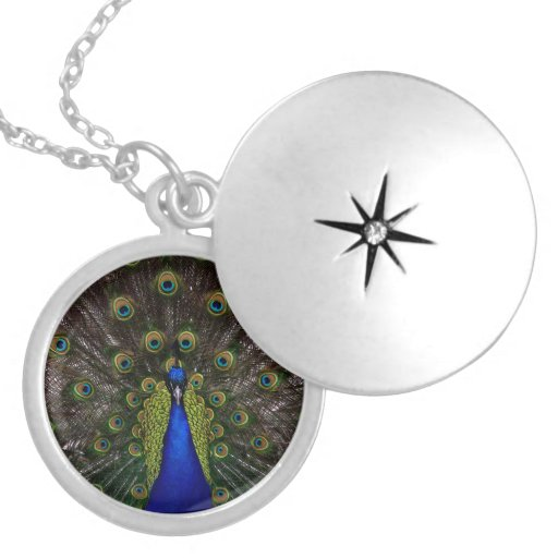 Splendid Peacock Jewelry
