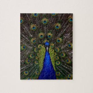 Splendid Peacock Jigsaw Puzzle