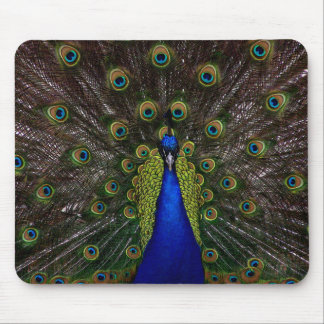 Splendid Peacock Mouse Pad