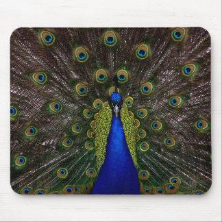 Splendid Peacock Mousepad