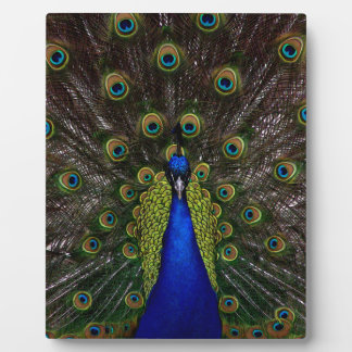 Splendid Peacock Plaque