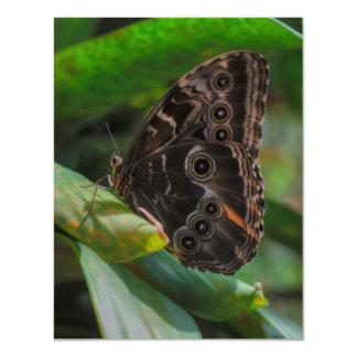 Splendor Wings Card