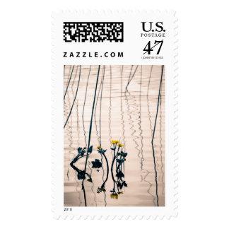 Split-toned kingcup flowers postage