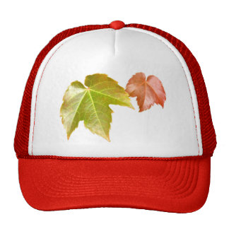 Splitting Season Mesh Hat